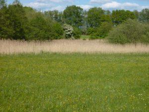 Eine der wertvollsten Feuchtwiesen der Gemeinde im direkten Umfeld von Godern. Eine Kleinseggen reiche Wiese im Kuckuckslichtnelke, Wiesenschaumkraut, Sumpfblutauge, Fieberklee und vielen weiteren typischen Arten.